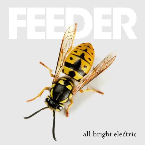feeder.hornet.master.hr_.rgb_ (1)